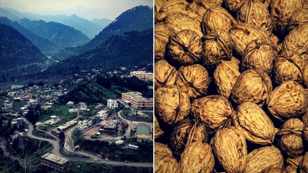 Kashmir Walnut Carbon Batteries